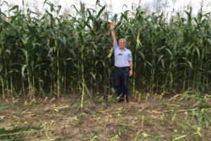 Уборка силосной кукурузы в Концерн РИАЛ-Агро, Кабардино-Балкария