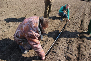 Определение густоты посева гибрида кукурузы Дарина в ООО Леднево, Владимирская область