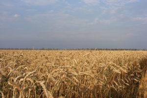 Отбор делится опытом: Технологии земледелия
