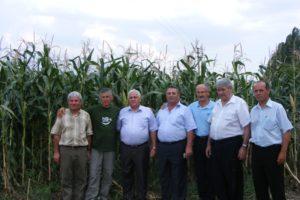 День поля кукурузы 2008