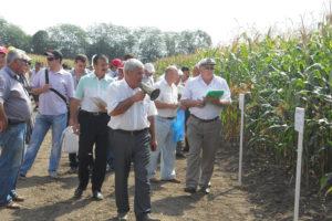 День поля кукурузы и подсолнечника 2012 в Кабардино-Балкарии