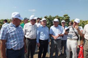 Участие агрофирмы «Отбор» в днях поля в Самарской, Белгородской областях и в собственном дне поля