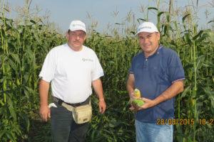Урожайность гибрида кукурузы «Родник 180 СВ» в Татарстане