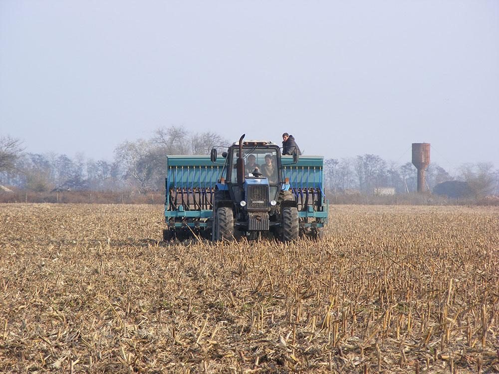 Интенсивное выращивание озимой пшеницы 23