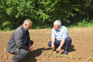 Обсуждение вопросов сортовой агротехники гибридов кукурузы ООО ИПА «Отбор»