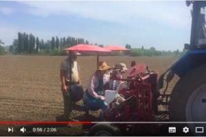 Посев селекционного питомника на поле №9